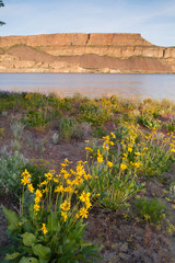 Banks Lake Steamboat Rock Eastern Washington Wildflowers Rocky Ridge