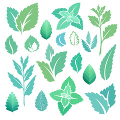 Mint leaves and branches icons set.