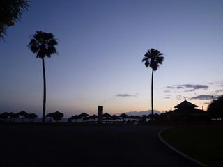 Palmen in der Abenddämmerung