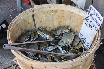 Fresh and tasty crabs for sale