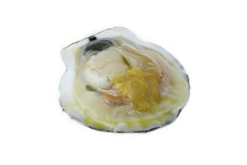 raw scallop on white background.