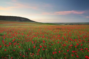 Foto op Canvas Toscane Poppies meadow landscape.