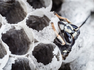 young wasp crawling out of its cell