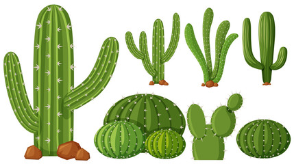 Different types of cactus plants