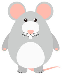 Gray mouse on white background