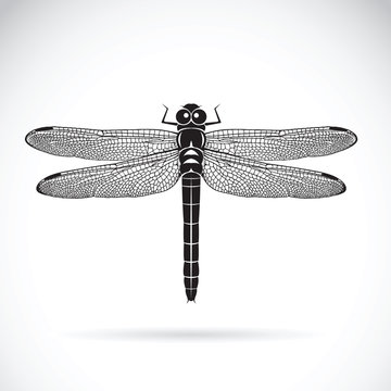 Vector of dragonfly on white background. Insect Animal.