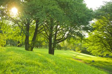 公園 夕日