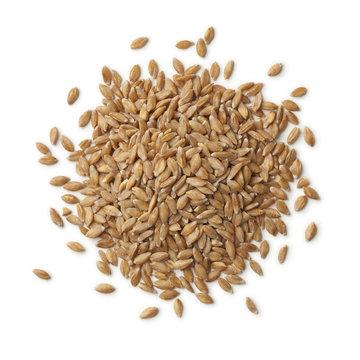 Heap of  Einkorn wheat seeds