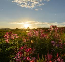 Tuinposter Feeën en elfen Blumenfeld bei idyllischem Sonnenuntergang