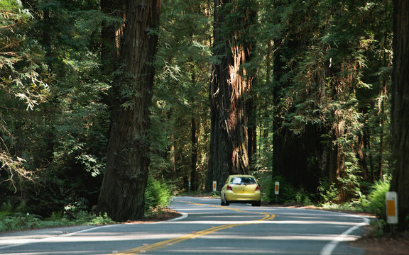 Driving through the Avenue of Giants