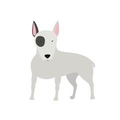 dog Bull Terrier standing