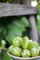 Bright, juicy gooseberries