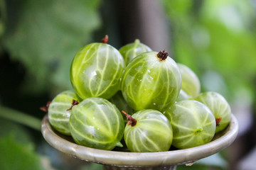 Bright, juicy gooseberries