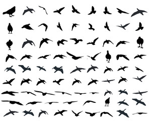 Flying birds and silhouettes on white background. Vector illustration. isolated bird flying. for tattoo graphic.