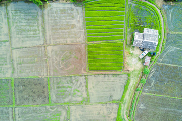 Aerial top view photo from flying drone of green rice fields in countryside Land with grown plants of paddy