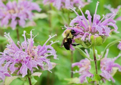 Bumble Bee Reaching Hard