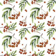 Watercolor seamless pattern with rowan. Hand painted mountain-ashe fruit with leaves and branch isolated on white background. Botanical illustration for design.