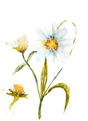 Wildflower painting, floral art, watercolor painting