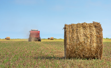 Fototapete - Universal tractor harvesting straw in the field.