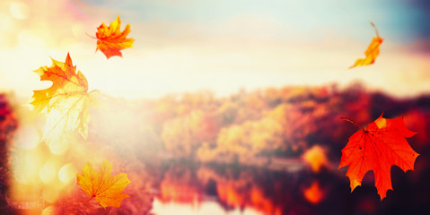Autumn background with falling leaves at landscape of  city park with colorful trees at sunset light with bokeh, panoramic banner