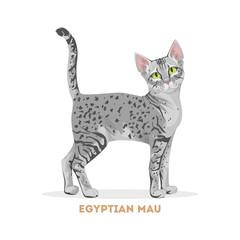 Egyptian mau cat.