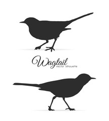 Vector illustration: Silhouette of Wagtail.