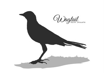 Vector Silhouette of Wagtail.
