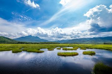 尾瀬・真夏の湿原