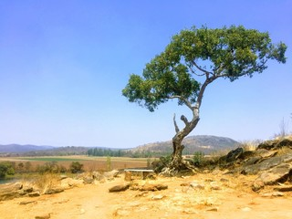 Lone tree on a hill in rural Zimbabwe
