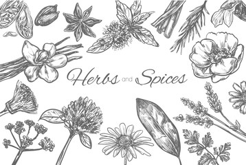 Herbs and Spices vector template. Frame in sketch style. Hand drawn illustration