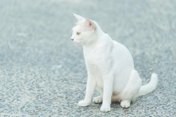 何かを見つめて座る白猫