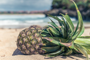 Fresh tropical exotic pineapple fruit on the beach. Parardise island of Bali, Indonesia.