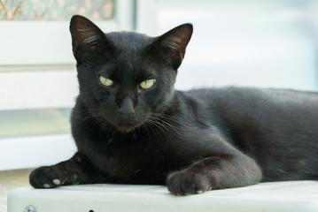優雅にくつろぐ黒猫