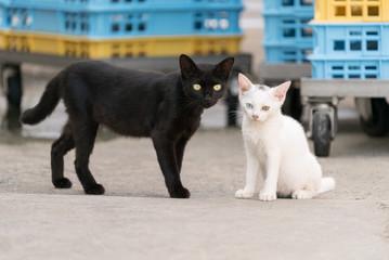 黒猫と白猫の子猫