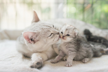 cat kissing her kitten with love