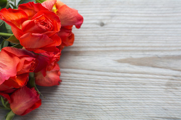 Several red fresh roses heads are on the wooden background