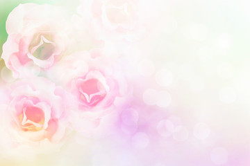 soft pink roses flower vintage pastel and filter background with copy space