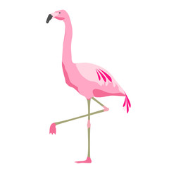 pink flamingo bird over white background