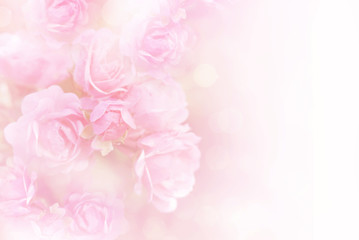 soft pink roses flower vintage background with copy space