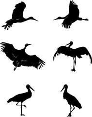 stork, bird, white, black, vector