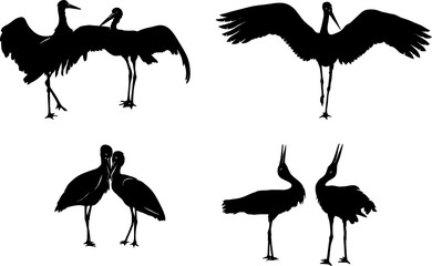 stork, bird, white, black, vector