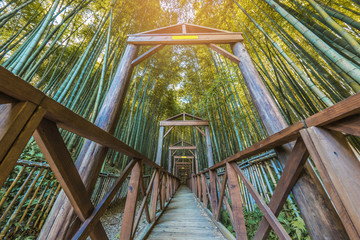Poster de jardin Bambou Bamboo forest at Daehandawon ,South Korea.