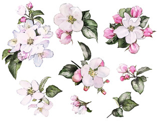 Set watercolor elements of peach, apple flowers, collection leaves, branches, bud. Floral illustration isolated on white background. Pink sakura flowers