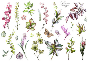 Big Set watercolor elements - wildflowers, herbs, leaf. collection garden and wild herb, flowers, branches.  illustration isolated on white background, exotic, tropical leaf. Butterfly