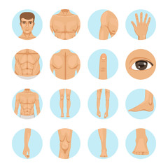 Vector human. Different parts of man body
