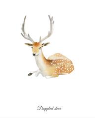 Handpainted watercolor poster with deer