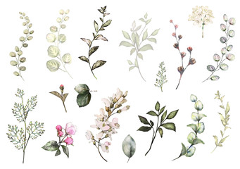 Set watercolor elements - wildflowers, herbs, leaf. collection garden and wild herb, flowers, branches.  illustration isolated on white background