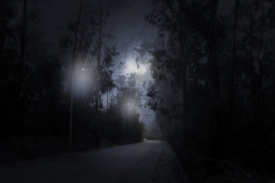 Forest road in a full moon night