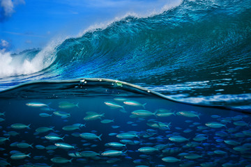 Tropical fish under ocean wave in sea water