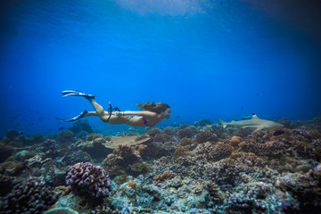 Female sport model swimming with blacktip reef shark over corals in Maldives. Deep blue water of Indian ocean. Marine background with fish
